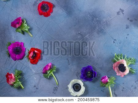 Blooming Anemones flowers frame with copy space on gray background