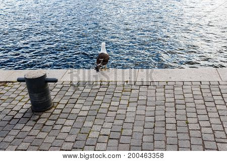 Sailing rope on a stone pavement pier and white black seagull