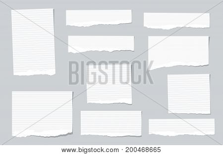 White ripped ruled, lined note, copybook, notebook paper strips stuck on grey background