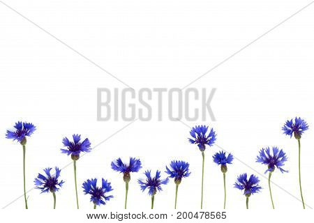 Blue cornflowers frame on white background. Top view