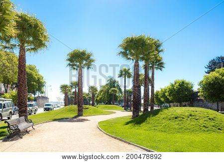 Bandejon With Palms In Vina Del Mar, Chile