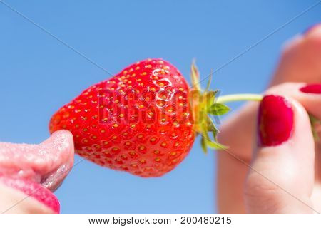 Female tongue red strawberry sexy concept. Delicious berry and female mouth. Female hand with red manicure holds strawberry and licks with tongue. Useful vitamins. Sexy strawberry blue background
