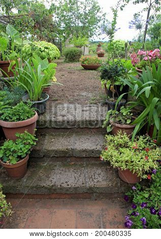 Old stone steps in small italian garden decorated by flower pots, Italy