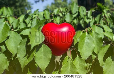 Puppet, red heart between the green leaves of the bush