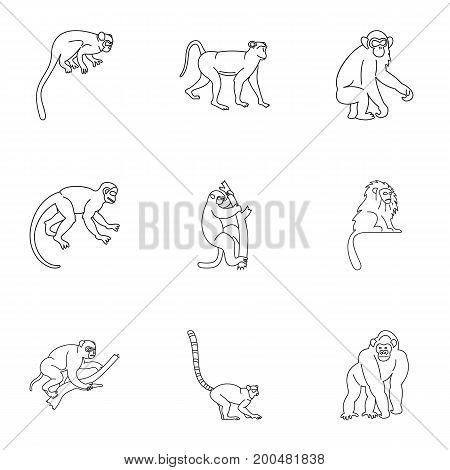 Monkey icon set. Outline set of 9 monkey vector icons for web isolated on white background