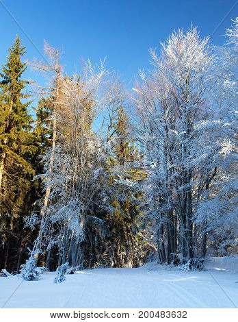 Wintry view from Javorniky mountains Slovakia woodland and skiing way
