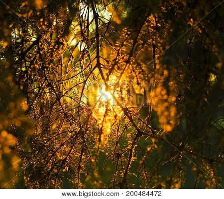 Warm colors sunset passing through some branches