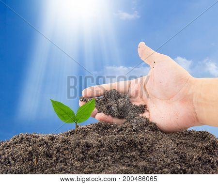 Hand Of Farmer Growing And Nurturing Tree Growing On Fertile Soil With Sky Background / Nurturing Ba