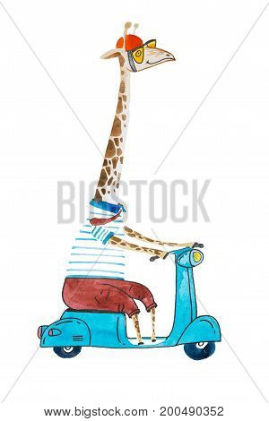 Watercolor cartoon giraffe dressed up in t-shit and trousers wearing helmet and sunglasses riding a scooter.