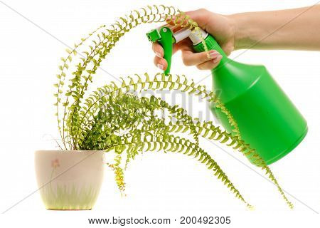 Spray and flower in a female hand on a white background isolation