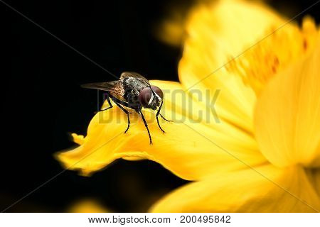 Fly on flower with close-up detailed view