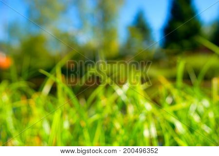 Horizontal green summer grass bokeh background hd