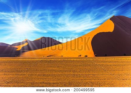 Namibia, South Africa, sunset. Hot sun of the Namib desert. The concept of extreme and exotic tourism. Orange, yellow and  purple dunes and small tree
