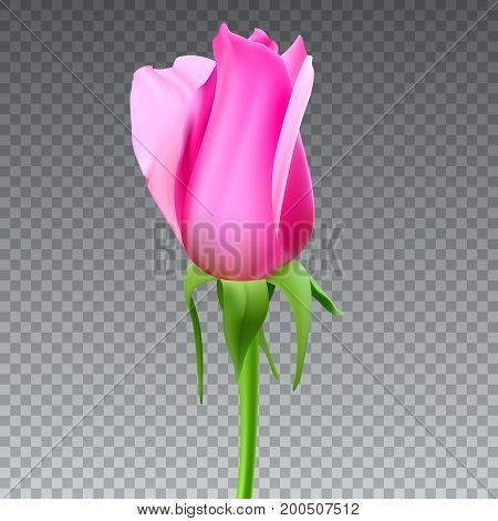 Realistic rose Bud with stem and leaves. Closeup, isolated on transparent background the flower Bud of the rose. The symbol of romance and love, a template for a greeting card, 3D illustration.