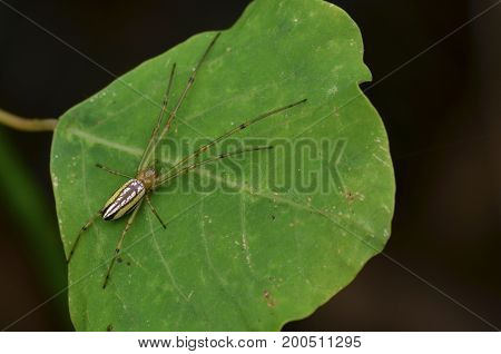 image of a silver orb spider on green leaf