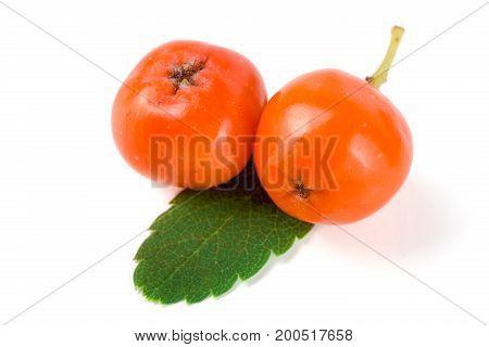 Orange rowan with leaf isolated on white background macro.