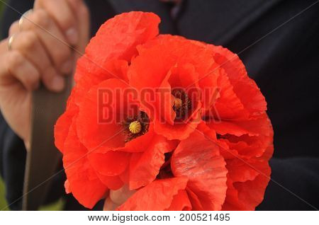 A bouquet of red poppies held in hands.