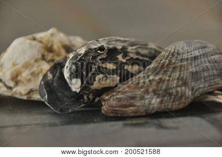 Shellfish snails from the Mediterranean Sea on the beach in Italy.