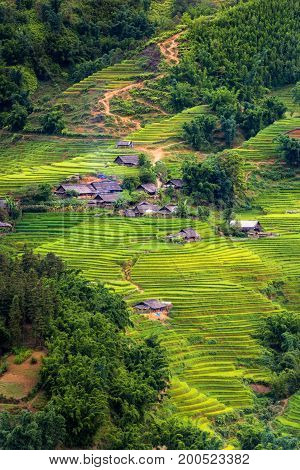 Layers of rice fields in the sunlight at Sapa Vietnam.