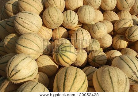 Musk melons