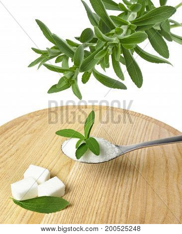 stevia rebaudiana healthy herb with no sugar