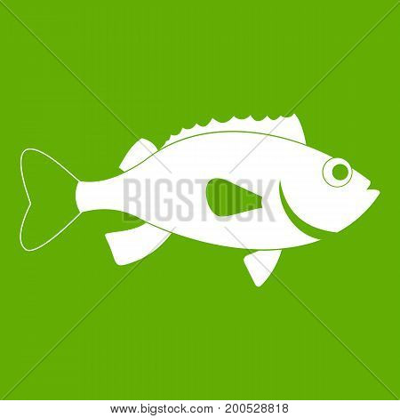 Sea bass fish icon white isolated on green background. Vector illustration