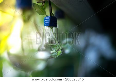 Decor of a glass bulb. Plants in a lamp with a blurred background