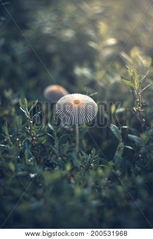 Mushrooms on a summer sunny morning with a blurred background