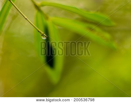 Single drop of water suspended from a twig with a green blurred background.