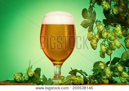 Octoberfest beer glass with hops on green background copyspace.