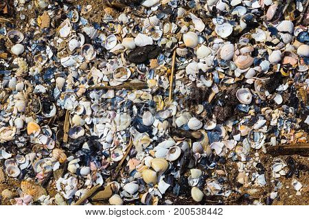 A lot of broken shells washed out Baltic sea shore nature background