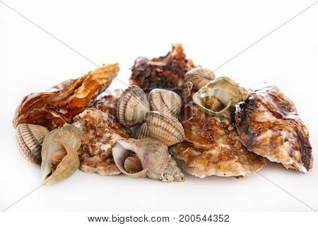 assorted clam and oyster