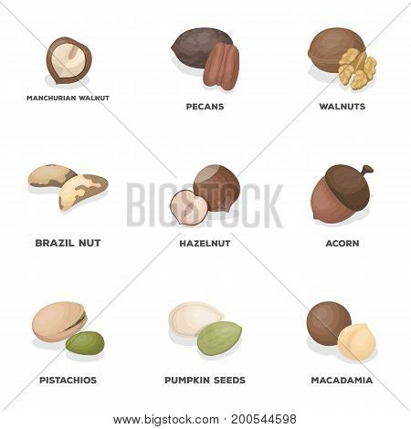 Hazelnut, pistachios, peanuts and other types of nuts.Different types of nuts set collection icons in cartoon style vector symbol stock illustration.