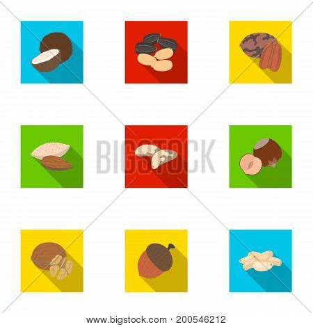 Hazelnut, pistachios, peanuts and other types of nuts.Different types of nuts set collection icons in flat style vector symbol stock illustration.