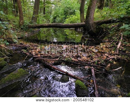 The incredibly view on stream with leaves and stones