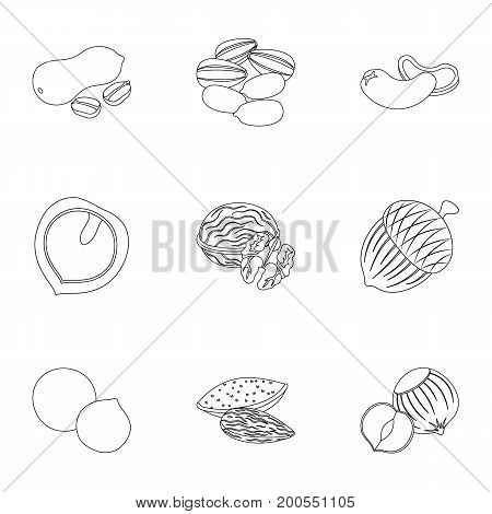 Hazelnut, pistachios, peanuts and other types of nuts.Different types of nuts set collection icons in outline style vector symbol stock illustration.