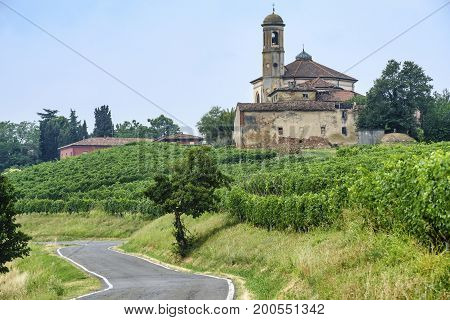 Rural landscape at summertime along the road from Ganaghello to Vicobarone (Piacenza Emilia Romagna Italy) in the Tidone valley. Vineyards