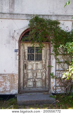 Langeland, Denmark, August 8, 2010: Old wooden door with cracked painting and ivy