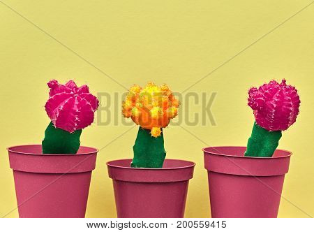 Cactus Fashion Design Set. Minimal fashion Stillife. Trendy Bright Colors. Creative Style. Pink Yellow Cactus Mood on Yellow background