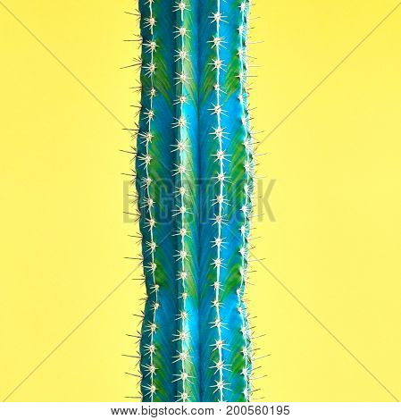Cactus. Fashion Color. Art gallery Design. Minimal Stillife. Blue Green Cactus Mood, Surrealism. Creative on Yellow background. Pop art