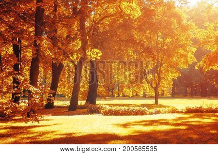 Autumn landscape - colorful autumn park in with golden autumn trees in sunny weather. Sunny autumn landscape park view with yellowed autumn trees under evening autumn sunlight. Beautiful autumn nature scene. Sunny autumn park