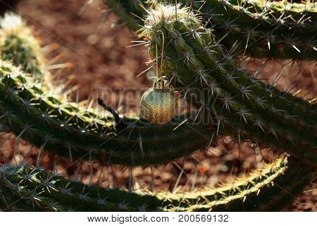 Golden Bauble Hanging From Prickle