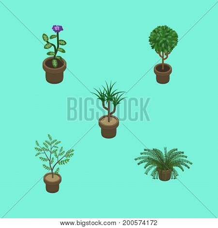 Isometric Flower Set Of Tree, Plant, Fern And Other Vector Objects