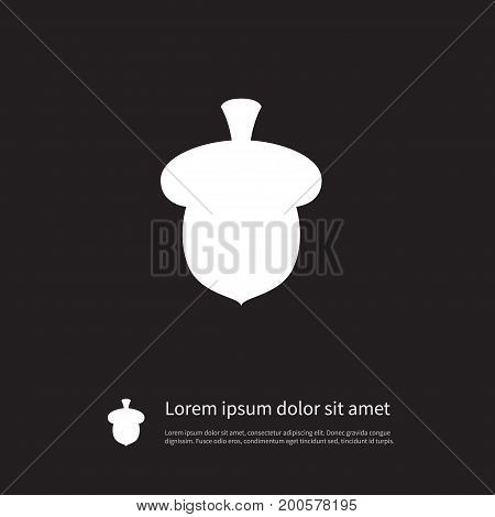 Seed Vector Element Can Be Used For Nut, Seed, Walnut Design Concept.  Isolated Walnut Icon.