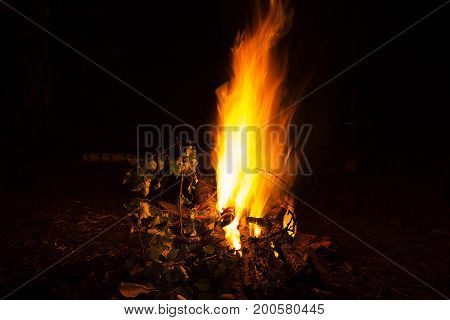 The bright bonfire burns at night. Fire flames. Night shot