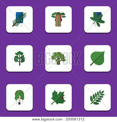 Flat Icon Bio Set Of Oaken, Baobab, Acacia Leaf And Other Vector Objects