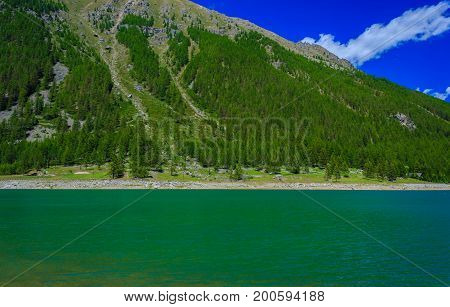 a suggestive green mountain lake along a slope covered with pine trees in the National Park of Great Paradise,in Piedmont,Italy