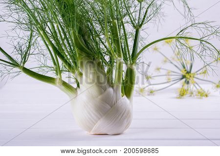 Raw fennel bulb with green stems and leaves, fennel flowers and root ready to cook on  white background