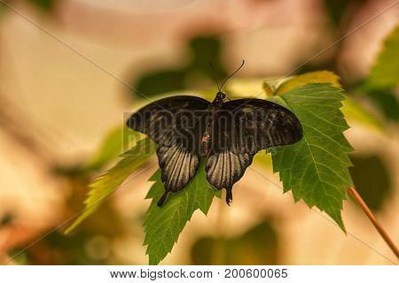 Beautiful butterfly in zoological garden