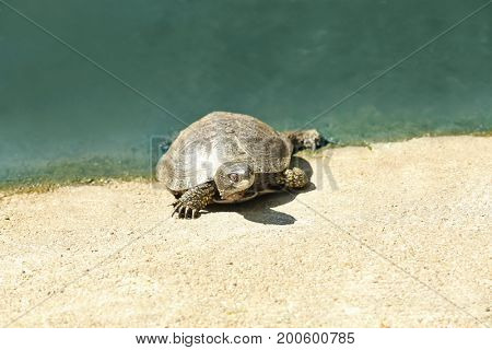 Small tortoise near pond in zoological garden
